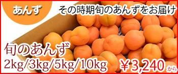 旬のあんず 長野県県産
