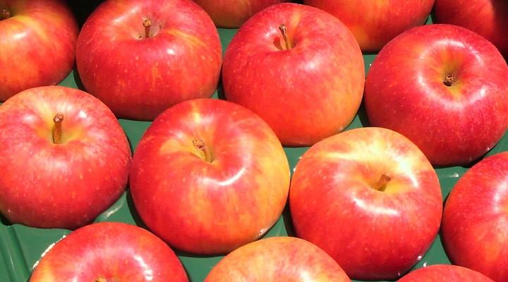 夏あかり 新品種 早生りんご