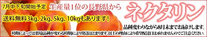 ネクタリン 生産量日本一の長野県から。!!