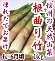 根曲り 山菜