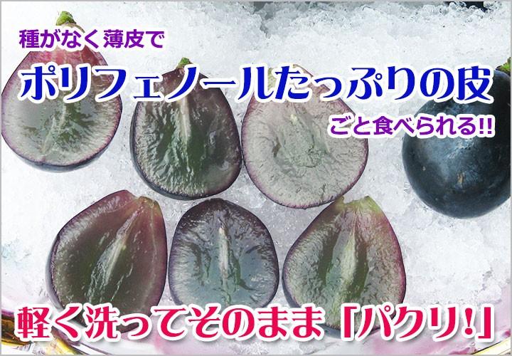 種無しで皮ごと食べれる ブドウ!ナガノパープル