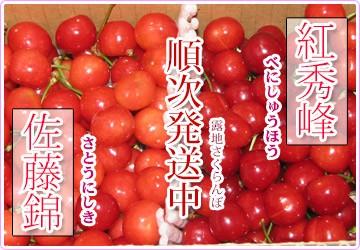 さくらんぼ食べ比べ 佐藤錦 紅秀峰