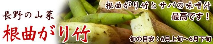 ネマガリダケ 山菜 天然