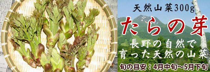 たらの芽 山菜 タラノメ
