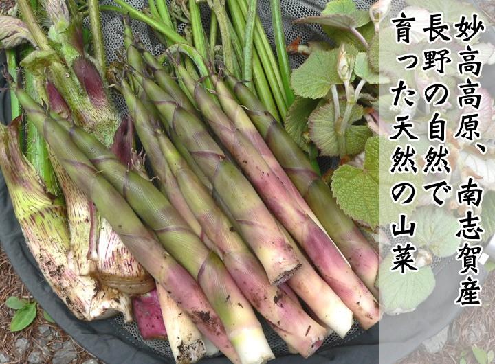 山菜セット 天然山菜
