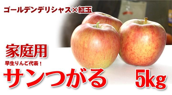 サンつがる 早生りんご