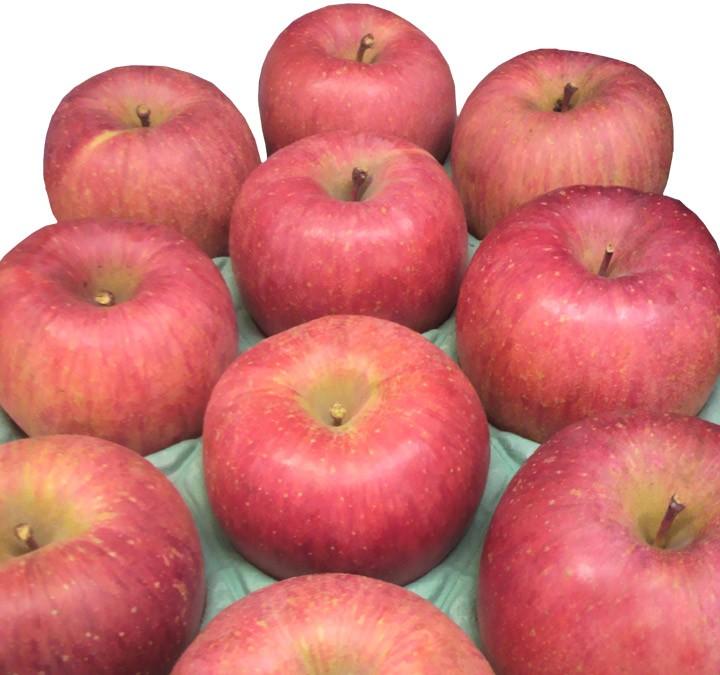 サンふじ 最上級りんご お歳暮ギフトに。