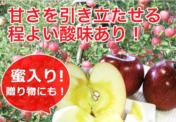りんごの定番!! サンふじ 早い者勝ち!