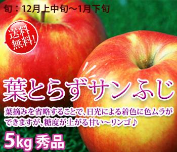 サンふじ 小玉16-18玉