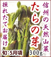 タラノメ 山菜
