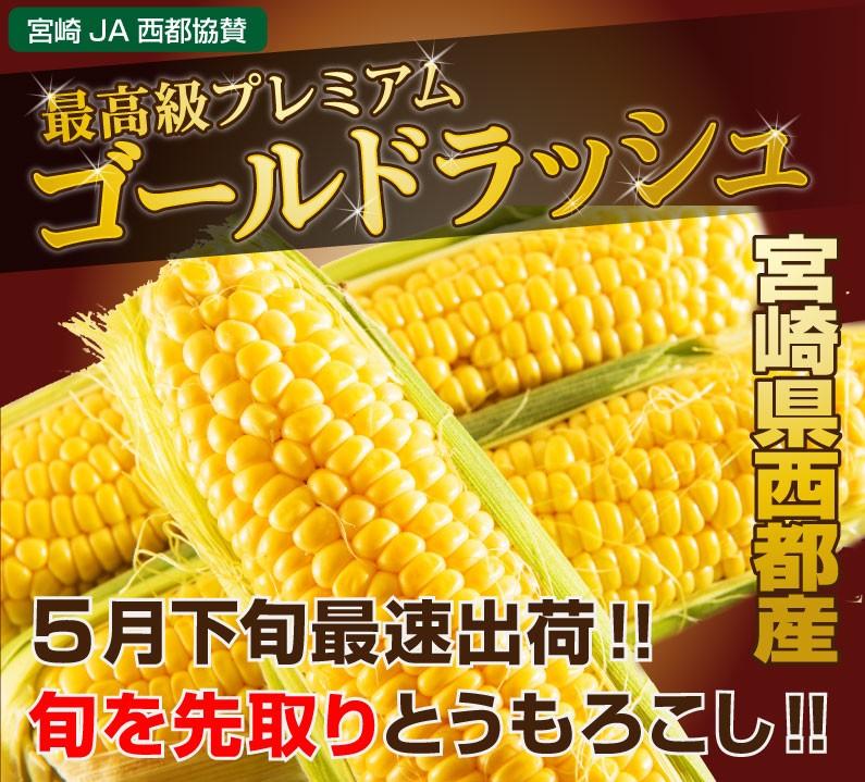 最高級プレミアム「ゴールドラッシュ」。宮崎県西都産。5月下旬最速出荷!日本一早いとうもろこし!!