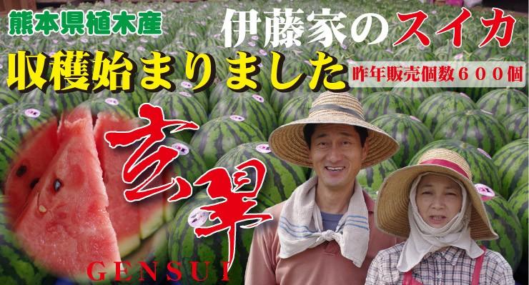 熊本県植木スイカ