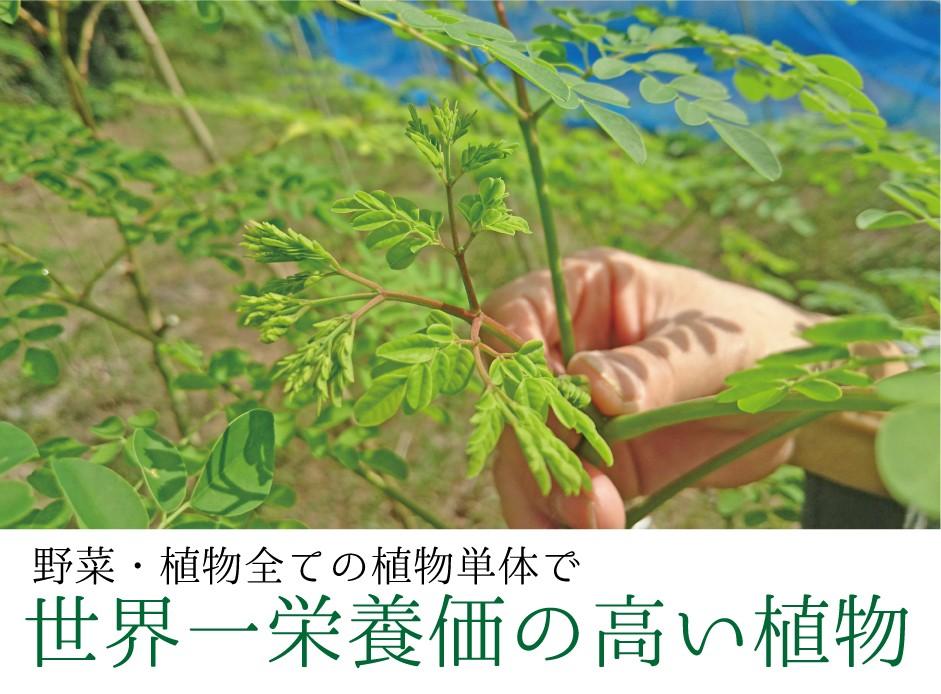 世界一栄養価の高い植物