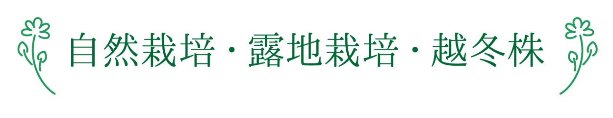 自然栽培・露地栽培・越冬株1