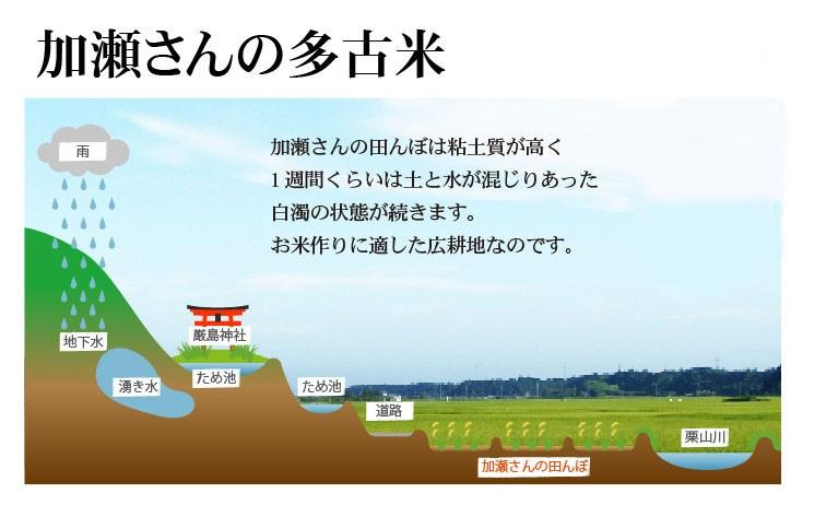 加瀬さんの多古米の美味しい理由