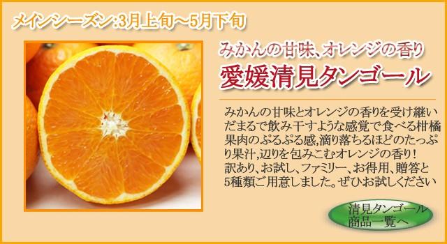 清見タンゴール(清見オレンジ)