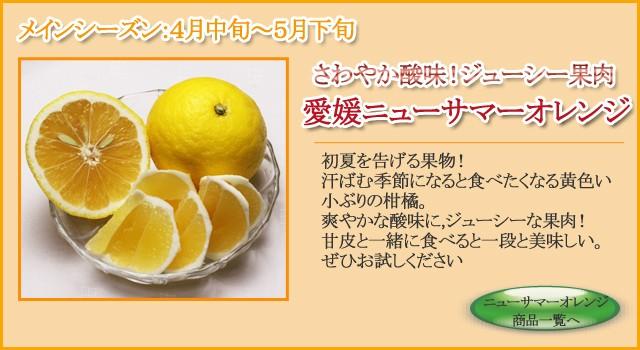 愛媛ニューサマーオレンジ(小夏)