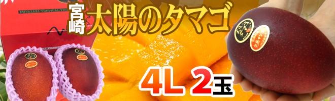 太陽のタマゴ4L2玉