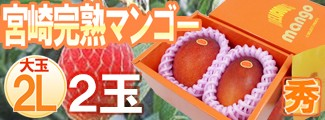 宮崎マンゴー2L2玉化粧箱