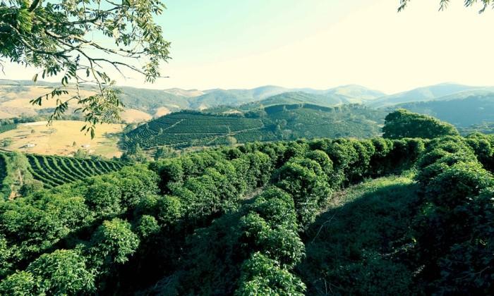 ブラジル サンタイネス農園