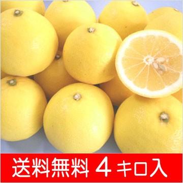 ニューサマーオレンジ4k