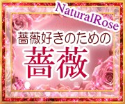 自然栽培の薔薇
