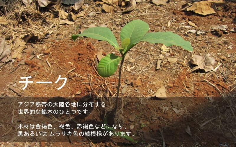 チーク アジア熱帯の大陸各地に分布する世界的な銘木