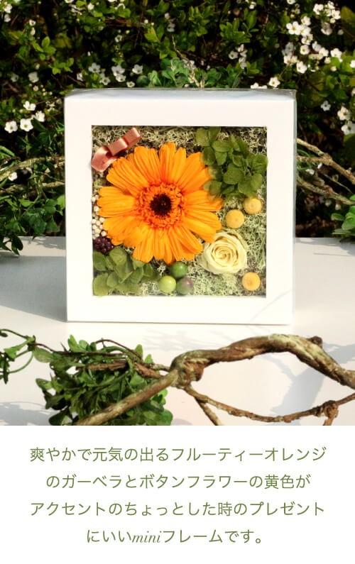 フルーティーオレンジのガーベラミニフレーム lpm0120 商品イメージ0