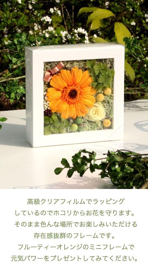 フルーティーオレンジのガーベラミニフレーム lpm0120 商品イメージ1