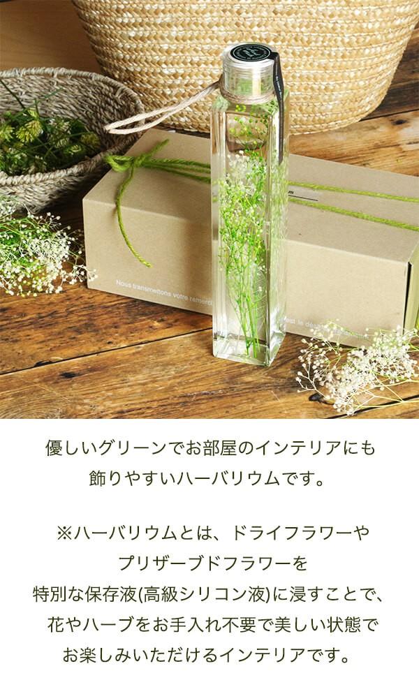 グリーンハーバリウム かすみ草 商品イメージ0