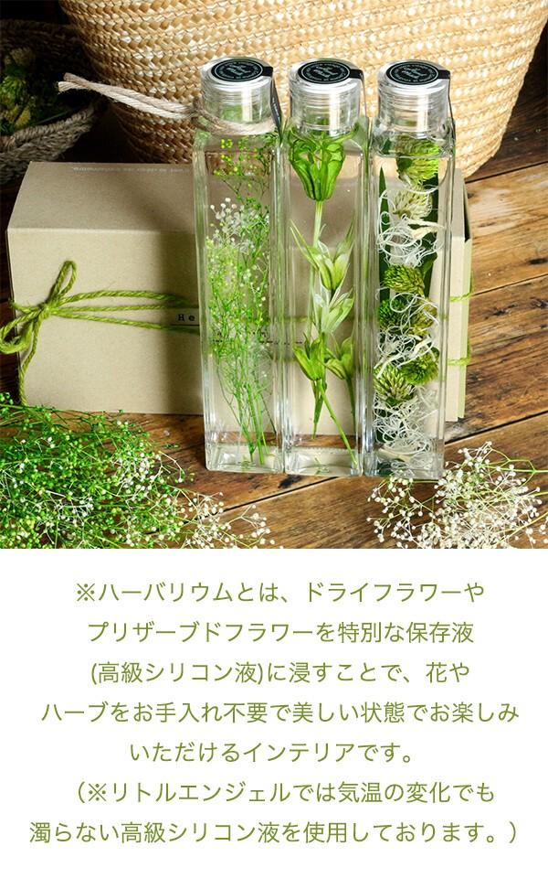 グリーンハーバリウム  ボタニカル 千日紅 商品イメージ1