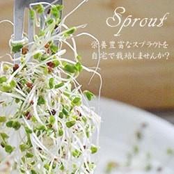 スプラウト♪自宅で栽培する野菜!
