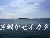 黒鯛 カセ/イカダ