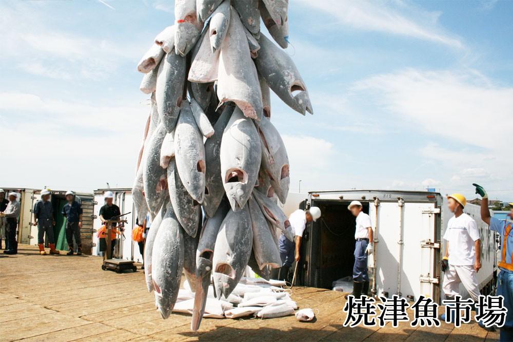 焼津魚市場 水揚げ