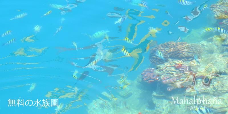 無料の水族園