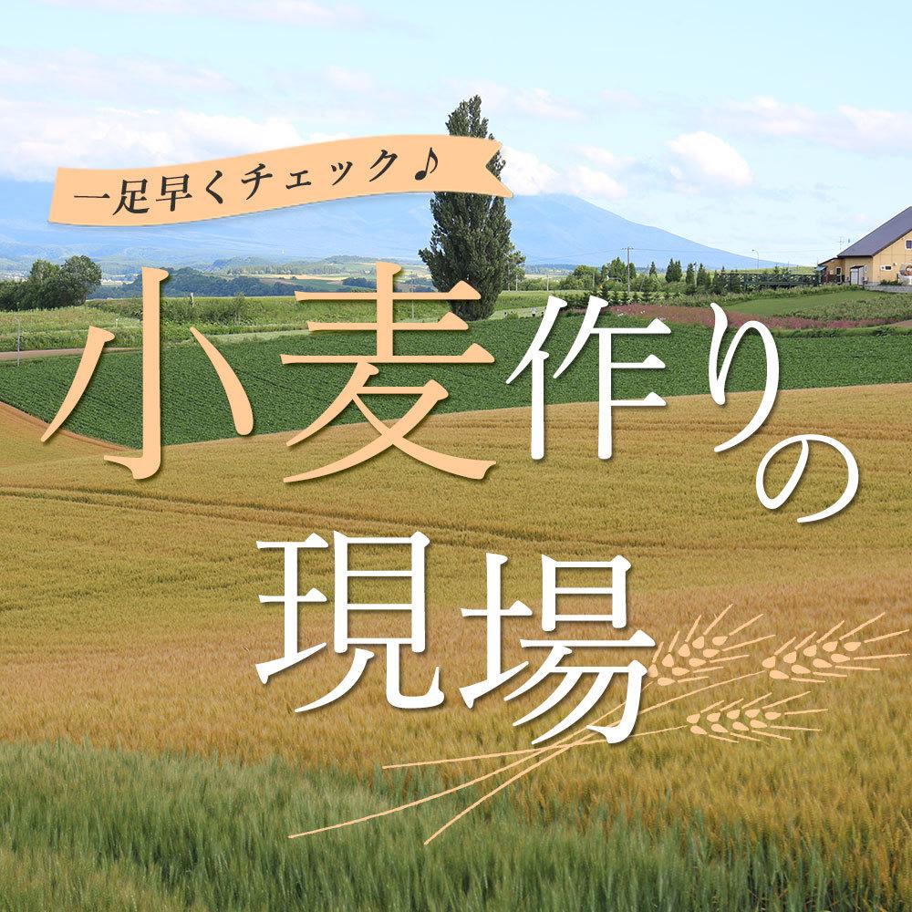 小麦ツアー