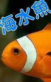 """""""海水魚"""""""