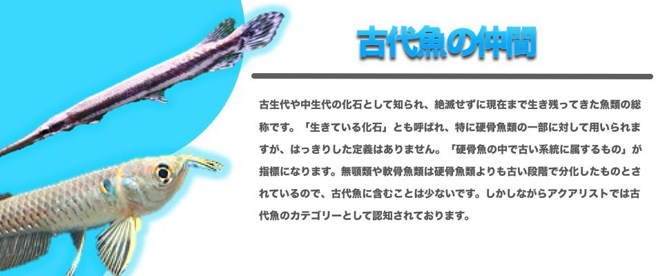 """""""古代魚"""""""