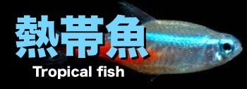 熱帯魚販売