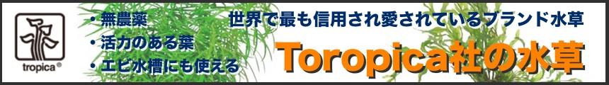 トロピカ社の水草のページへ