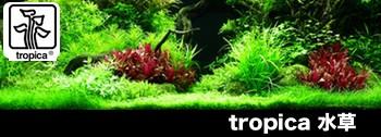 Toropica水草ページへ