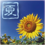 フルーツ王国岡山県を代表する夏の果物