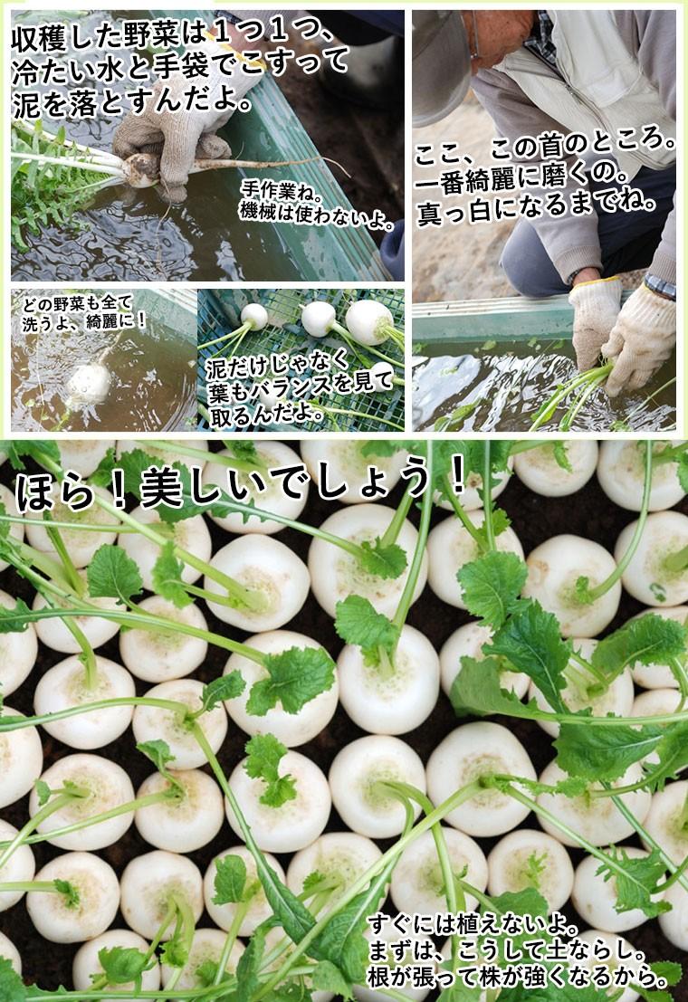 七草寄せ植え
