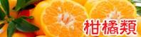 柑橘系(みかん)