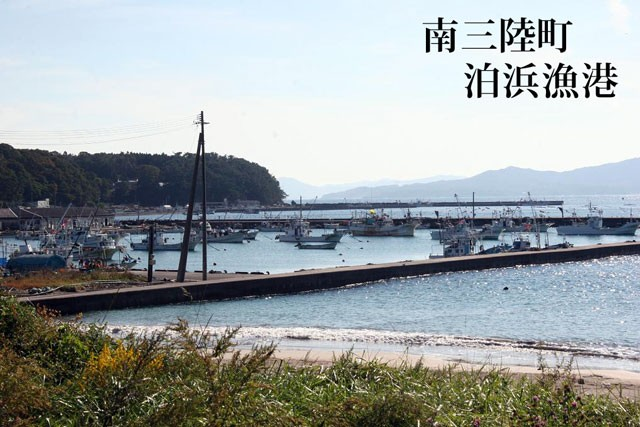 南三陸町 泊浜漁港