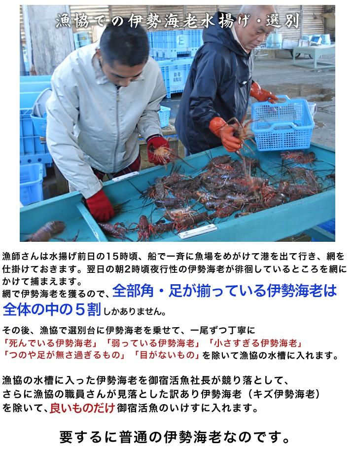 漁協での選別