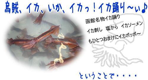 イカ踊り「函館」から直送