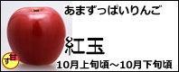 紅玉 長野県産りんご
