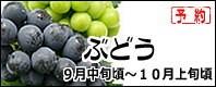 ぶどう 長野県産