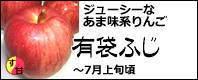 有袋ふじ CA貯蔵 長野県産りんご